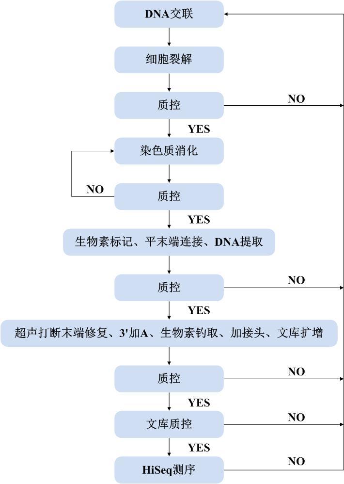 信息分析 植物hi-c的标准信息分析流程如下图