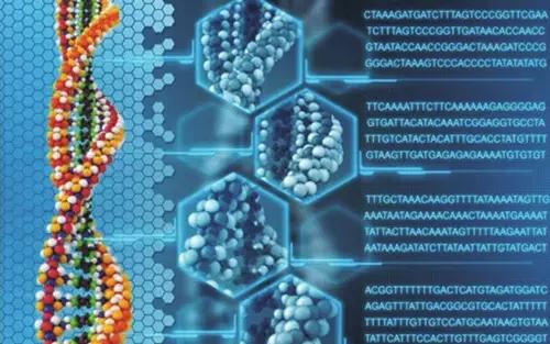 基因组.jpg