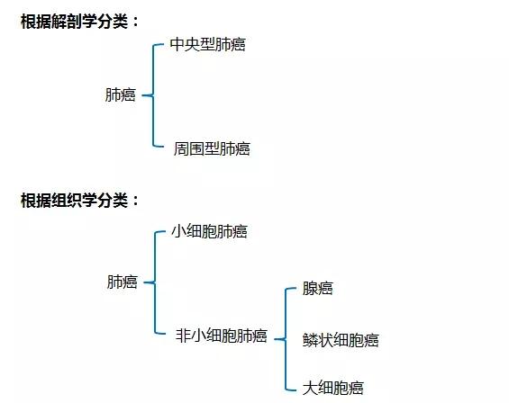 肺癌分类.jpg