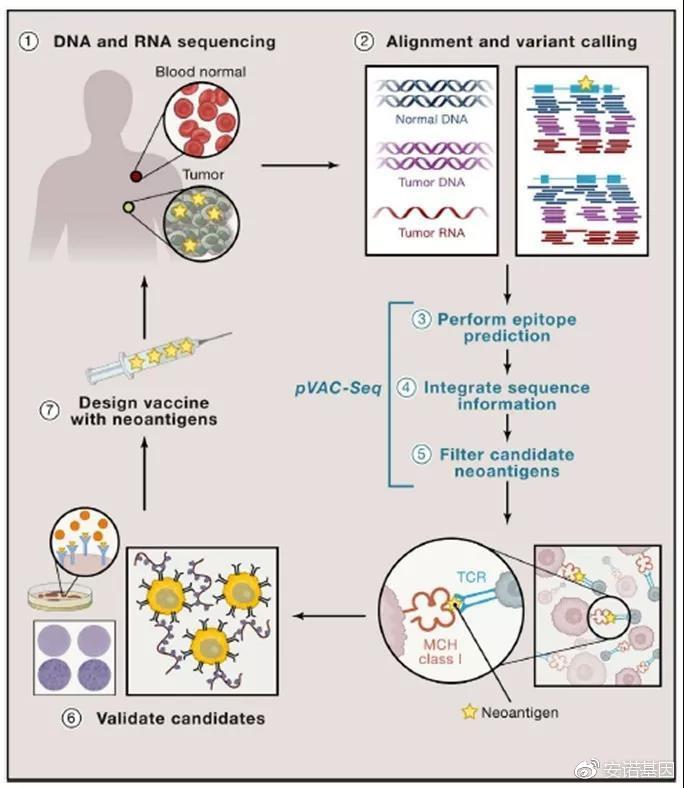 安诺生信大讲堂-肿瘤免疫治疗,靶向药物分析全面解读
