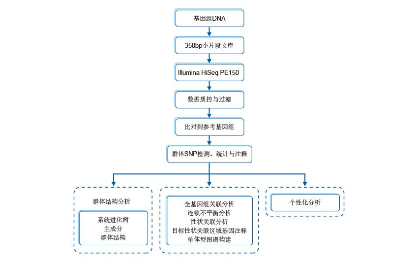全基因组关联分析技术流程